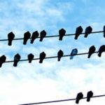 Psicoterapia de Carl Rogers: orígenes, evolución y relación con la psicología científica