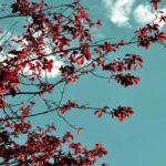 Concepto de resiliencia o el arte de crecer